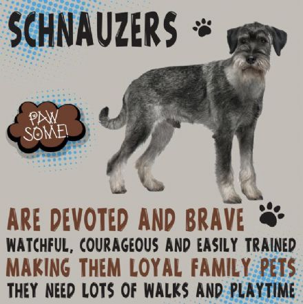 Schnauzers Metal Wall Sign